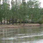 F13 - Comarca Río Colorado - La Adela - 007